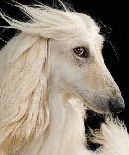 doggy-that-uses-head-shoulders